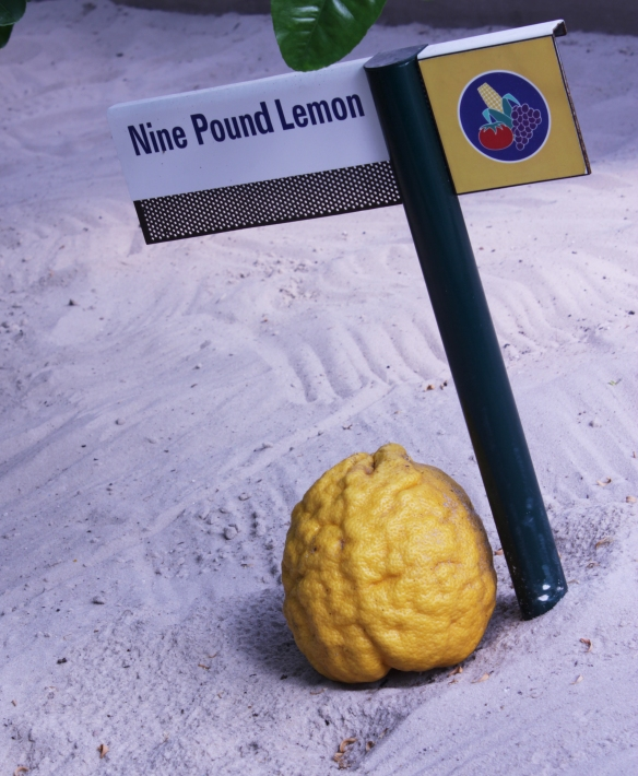 Nine Pound Lemon